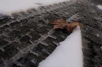 冬落葉 - フォトな日々