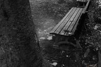 冬のベンチ - フォトな日々