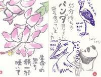 頂いた絵手紙ありがとうシャンシャン♪♪ - NONKOの絵手紙便り