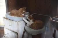 猫神様はサービス精神旺盛その48茶色倶楽部 - りきの毎日