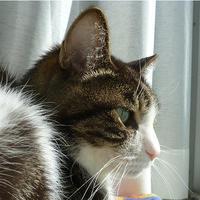 POP JAPAN Special Cats Exhibitionに 参加します その3 - 続ねこのひと~むらよしみのぶろぐ