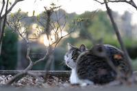 まゝに/公園猫 - Maruの/ まゝに