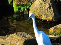 身近な鳥たち - 気ままな日記