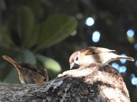 ふるさとの浜辺公園 - THE 鳥☆鉄
