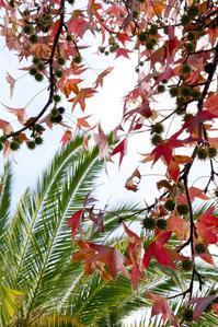 南カリフォルニアの季節感 - ハリウッドの丘から/折原恵のロサンゼルス通信  Kei Orihara blog