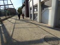 今月の体験イベント - 大阪北摂のノルディック・ウォーク!TERVE北大阪のブログ