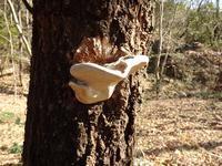 『金華山山麓を歩いて(キノコと木々達)』 - 自然風の自然風だより