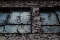 Winter Ivy - フォトな日々