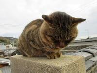 風が寒い - 猫背の話し
