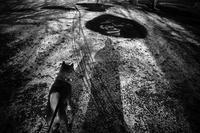 kaléidoscope dans mes yeux2019駅前#04 - Yoshi-A の写真の楽しみ