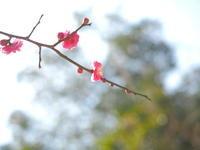 春告草のほほえみ - ecocoro日和