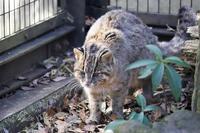 よこはま動物園ズーラシア2019年1月23日その1 - お散歩ふぉと2