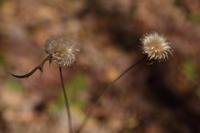 光を宿す枯れ実たち - 風の彩り-2