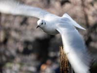 夢を育む鳥たちBirds inspire Dreams - B.I.R.D.S