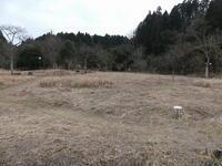 枯枝も楽し - 千葉県いすみ環境と文化のさとセンター