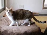猫のお留守番 ウィンクくん編。 - ゆきねこ猫家族