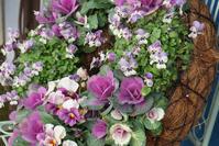 温室の花(百合が原公園) - お茶にしませんか2