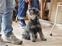 犬のしつけ方教室1/24 - SUPER DOGS blog