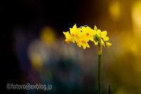 春の使者たち - となりのフォトロ