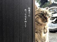 安心のまん丸 - gin~tetsu~nosuke
