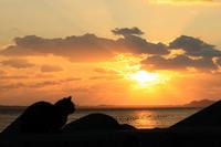 先客(3)。 - 青い海と空を追いかけて。