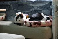 おニューなベッド#09 - Black Cat Moan