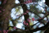 春待ち - ナナイロノート