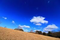 青空いっぱいの奈良公園 - 司法書士 行政書士の青空さんぽ