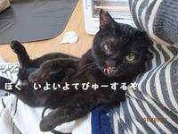 サインは手形ポン - 八幡地域猫を考える会