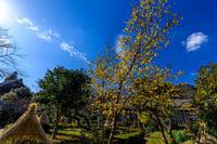 蝋梅咲く石光寺 - 花景色-K.W.C. PhotoBlog