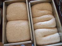 サンドウィッチのリクエスト*酒種酵母の食パン* - 土浦・つくば の パン教室 Le soleil