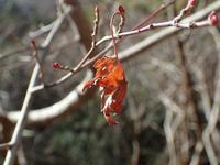 谷筋で見つかる幼虫と卵 - 蝶超天国