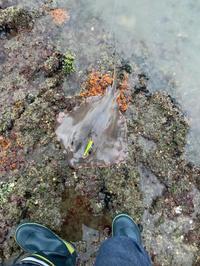 シーバス釣りに行ったはずが奴が釣れた…… - 広島の〜中学生Seabass angler