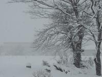 久々の大雪。 - 大朝=水のふる里から