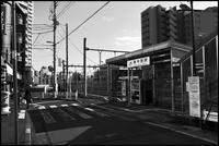 中野-30 - Camellia-shige Gallery 2