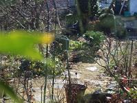初雪 - 絵と庭