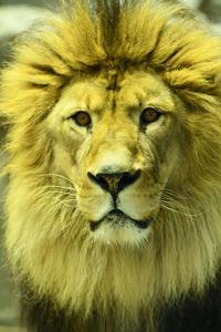 ライオンの顔☆彡 - DAIGOの記憶