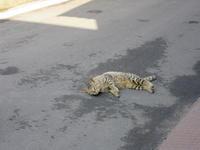 ゴロンゴロン - 猫背の話し