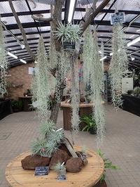 「エアプランツとその仲間展」始まりました! - 手柄山温室植物園ブログ 『山の上から花だより』