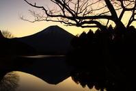 31年1月の富士(22)田貫湖日の出の富士 - 富士への散歩道 ~撮影記~