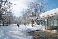 やはり美しい中島公園 - 柳に雪折れなし!Ⅱ