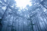支天の森~鉢伏山にて~ - 拙者の写真修行小屋