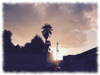 日が長くなった - マリカの野草画帖