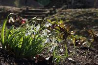 春を告げる花 - miyabine's フォト日記2~身の周りのきれい・可愛い・面白い~