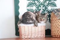 どうしても一緒に入りたい猫 - きょうだい猫と仲良し暮らし