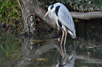 野鳥の森の鳥さん - 鳥と共に日々是好日