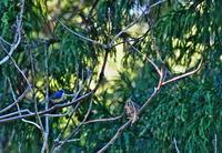鳥がいました - 蓮華寺池の隣5