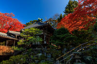 京の紅葉2018紅葉が彩る哲学の道と霊鑑寺 - 花景色-K.W.C. PhotoBlog