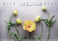 『カメラが恋する花とスタイリング』略して恋バナ。藤沢は3日で満席でしてん、キャンセル待ち承り中です。 - 東京女子フォトレッスンサロン『ラ・フォト自由が丘』-写真とフォントとデザインと現像と-
