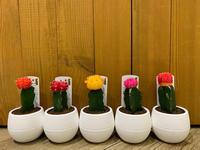 寒い日こそ観葉植物!!(^-^) - ブレスガーデン Breath Garden 大阪・泉南のお花屋さんです。バルーンもはじめました。